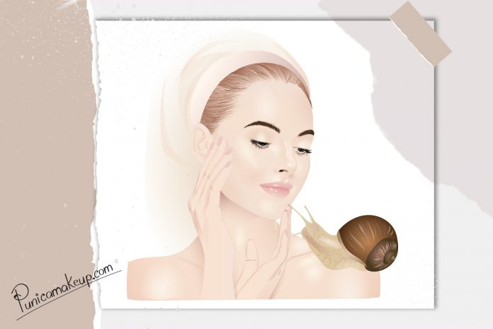 Snail Slime skincare illustration