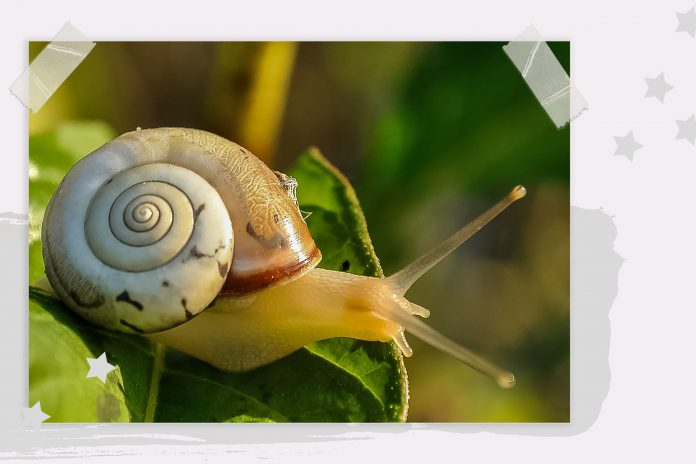 Snail Slime was used for medicinal and curative purposes